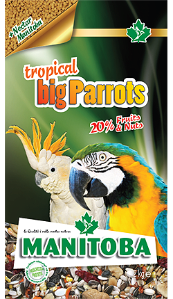 Tropical Big Parrots (con NectarManitoba)